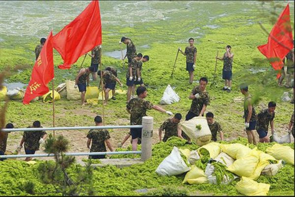 Chinese soldiers remove blue-green algae from a beach in Qingdao, eastern China