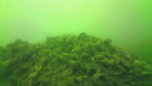 Kelly's Island, invasive quagga and zebra mussels.
