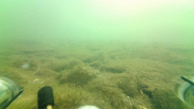 Lorain algal bloom mats